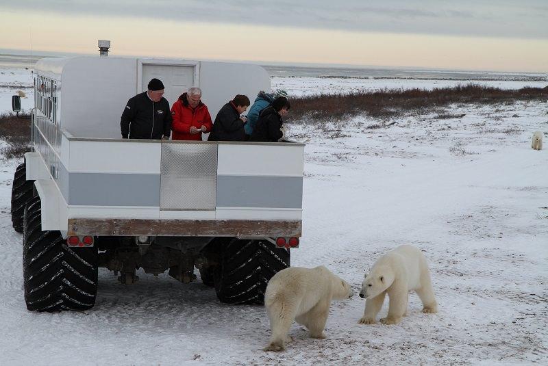 خرس قطبی کانادا