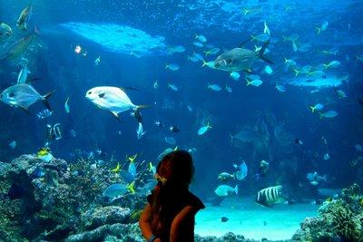 آکواریوم سیدنی، یک اقیانوس کوچک در دل استرالیا