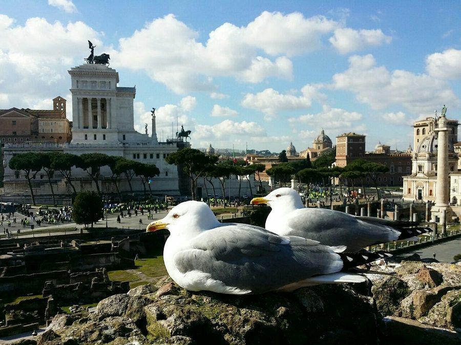 رم از نگاه دیگر
