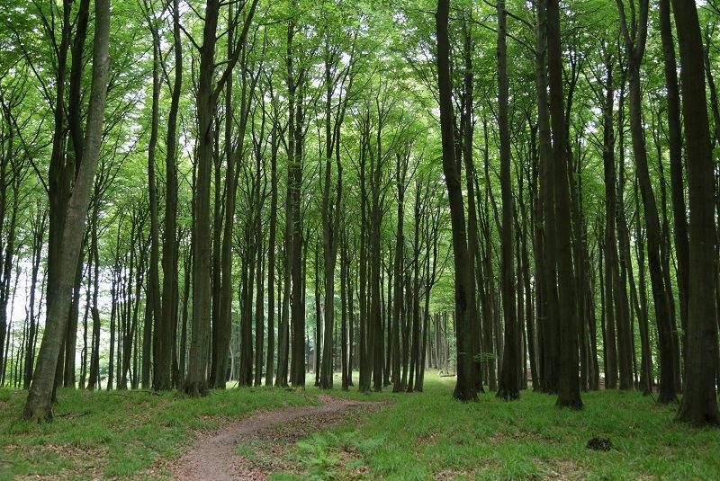 طبیعت آلمان - جلذبه های دیدنی