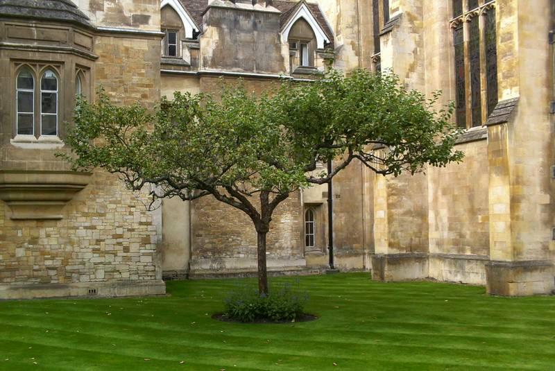 قلمه درخت سیب نیوتن کمبریج