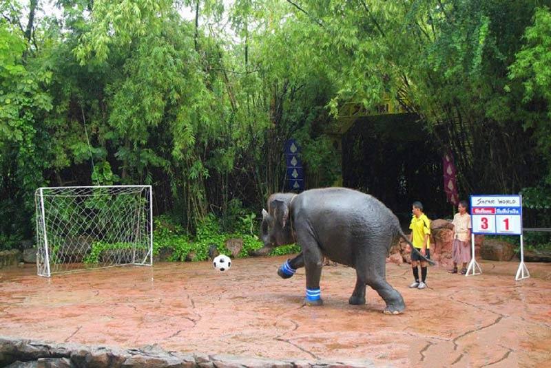 باغ وحش سافاری بانکوک