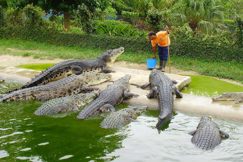 کمپ فیلها،مزرعه کروکودیل،تایلند