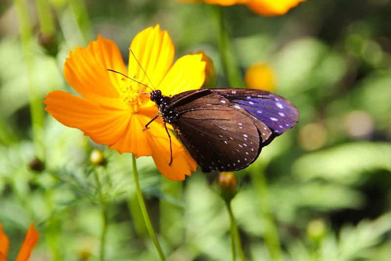 پارک پروانه ها و قلمرو حشرات سنتوزا سنگاپور