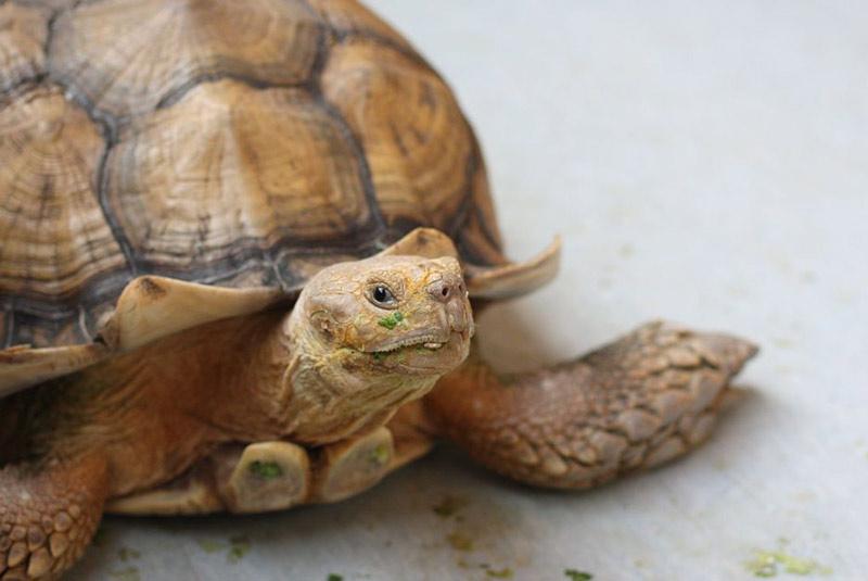 موزه لاک پشت های زنده در سنگاپور