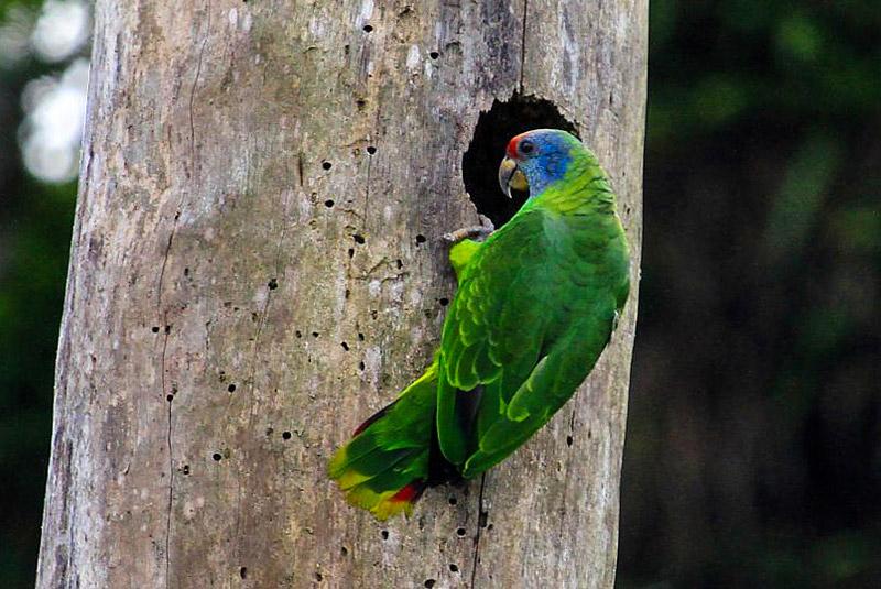 باغ پرندگان ایگواسو