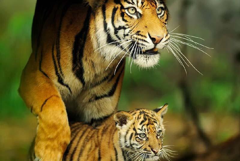باغ وحش ترونگا در استرالیا