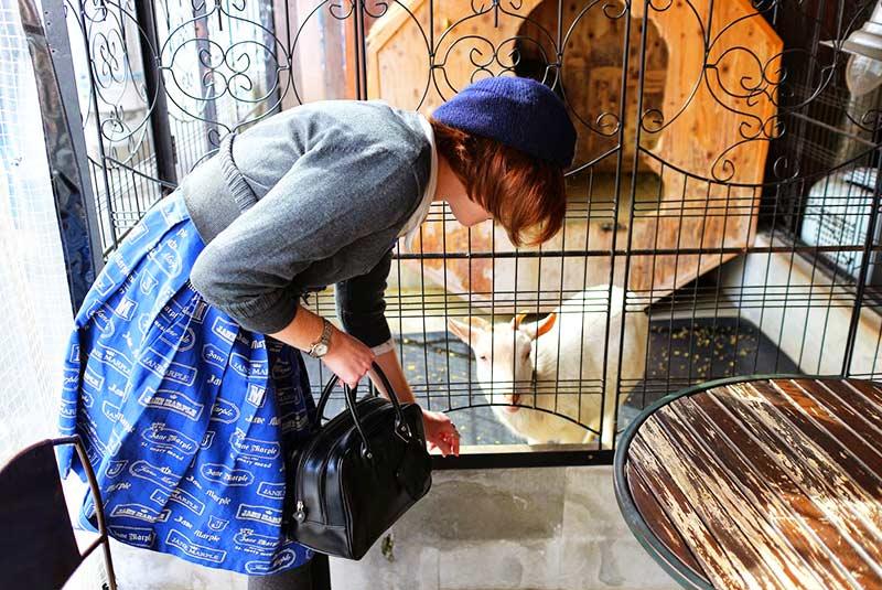 کافه حیوانات توکیو