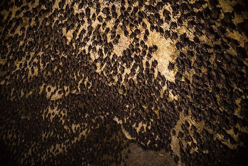 غار خفاش ها در ماهندرا