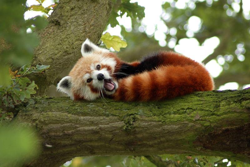 پارک حفاظت حیات وحش بیرمنگام