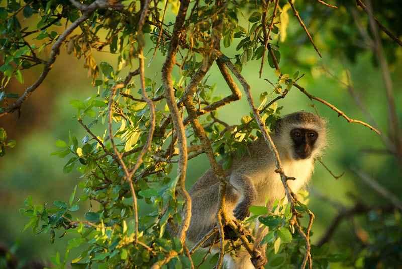پارک میمونها