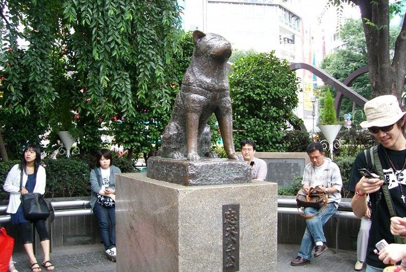 شیبویا در ژاپن