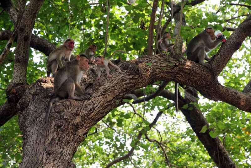 پارک میمون ها