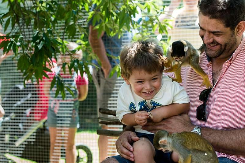 پارک میمون ها آفریقای جنوبی