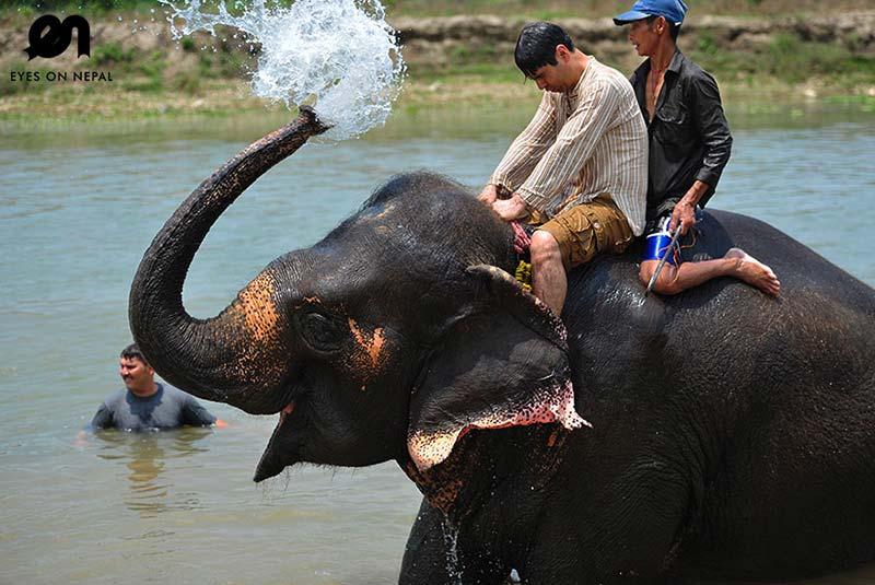 دیدنی های چیتوان | نپال