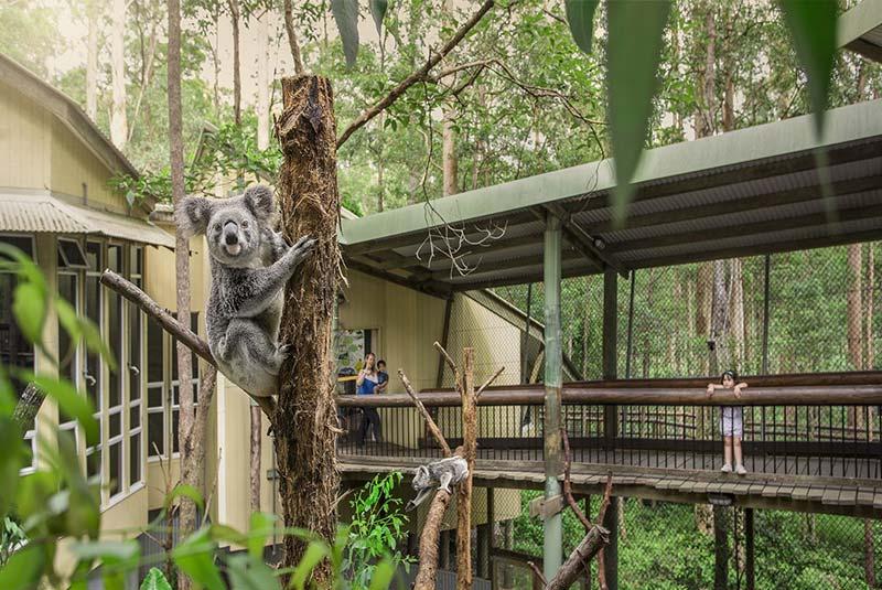 پارک کانگورو بریزبن