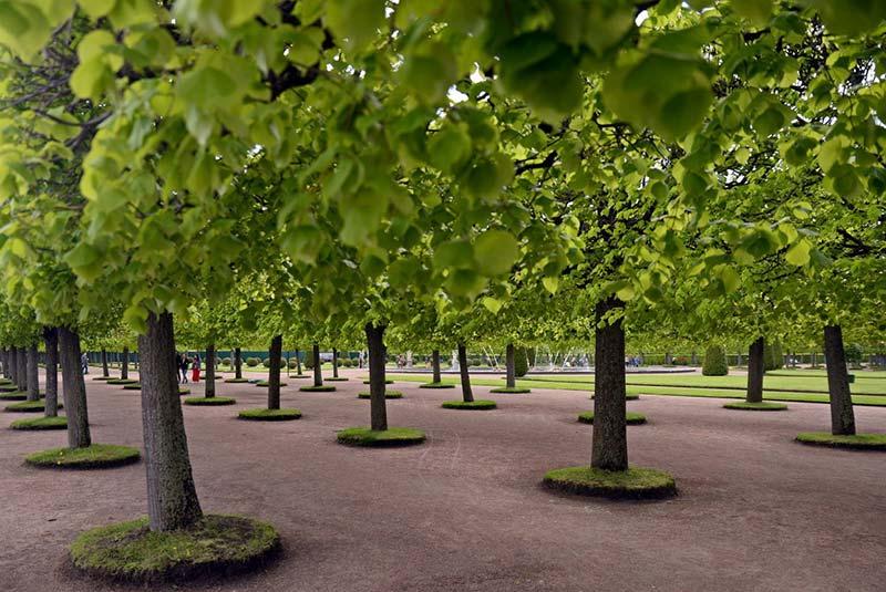 باغ پترهوف روسیه - سن پترزبورگ