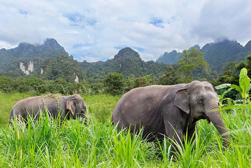 دیدنی های تایلند