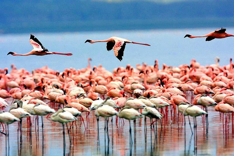 دیدنی های تانزانیا