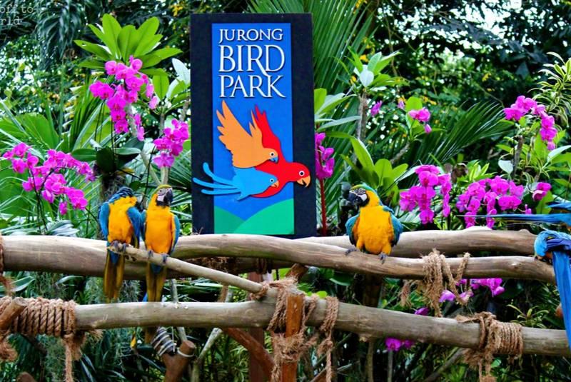 پارک پرندگان جورونگ سنگاپور