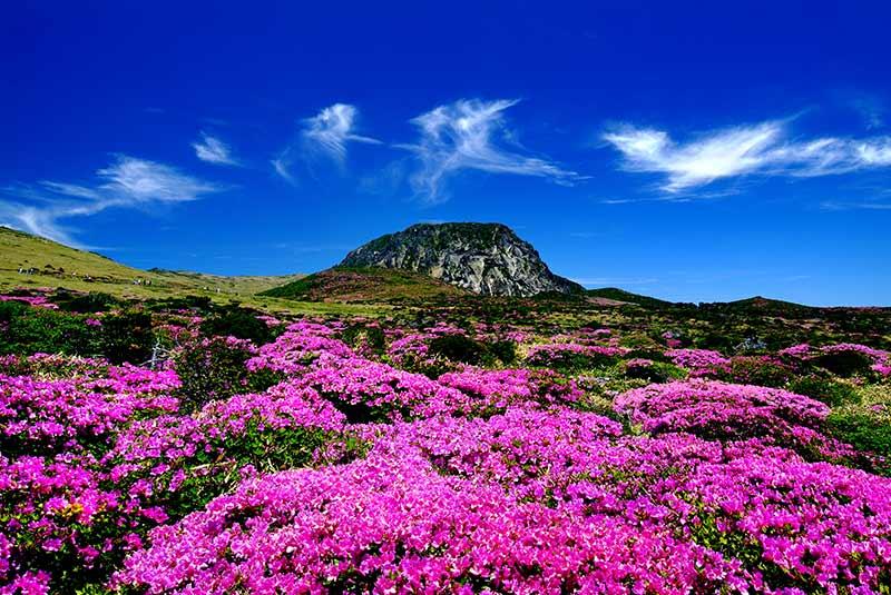 پارک ملی هالاسان در جیجو
