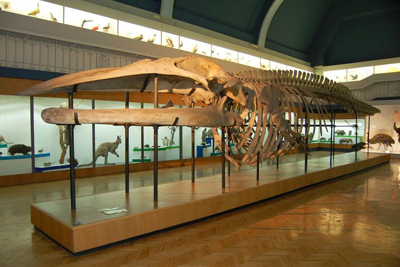 موزه تاریخ طبیعی کرواسی