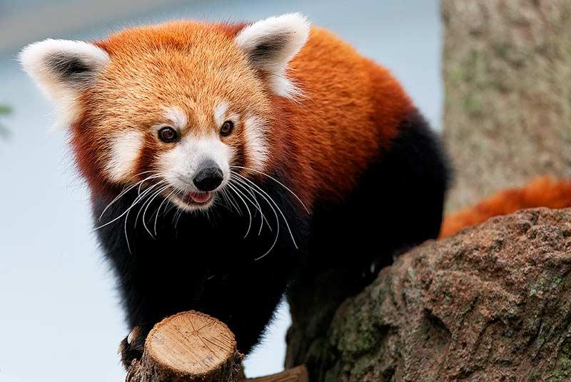باغ وحش پاتان لالیتپور