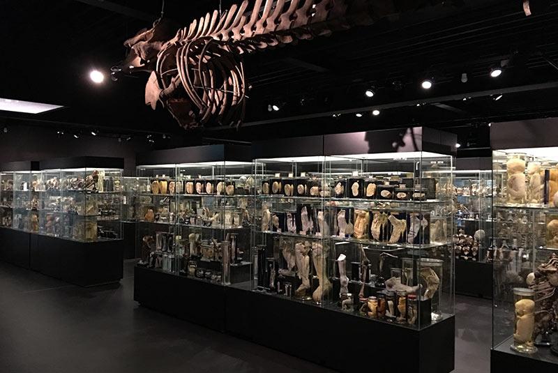 موزه ورولیک