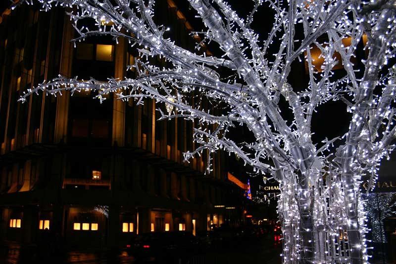 بزرگترین درخت کریسمس در سوئیس