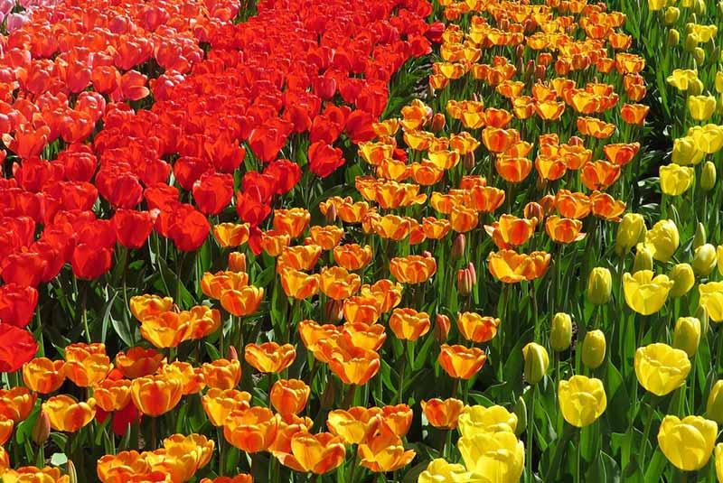 مادرید در بهار