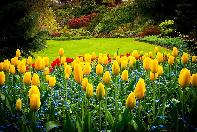 پارک ملکه الیزابت ونکوور