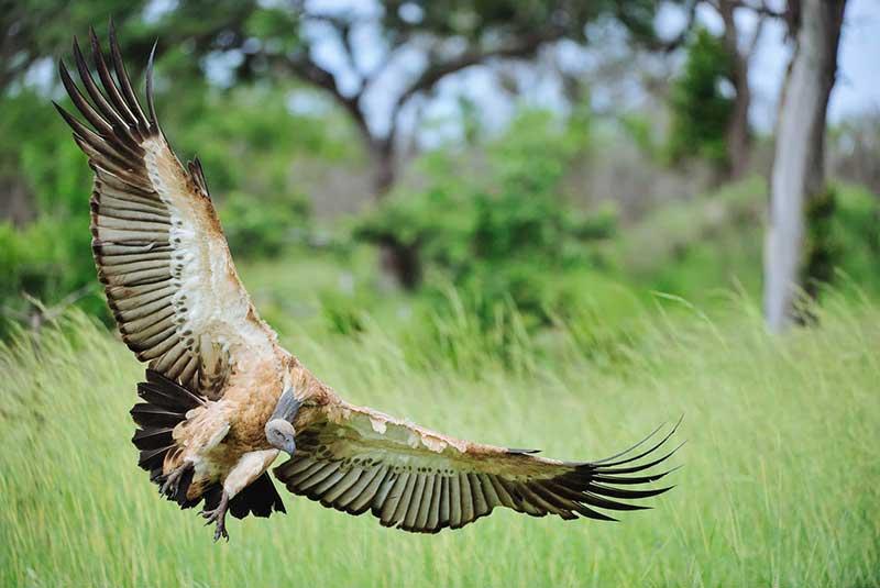 پارک ملی کروگر آفریقای جنوبی