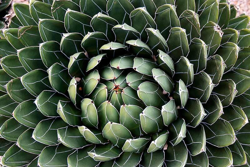 باغ دی موسن کوستا آی جوبریرا در بارسلون