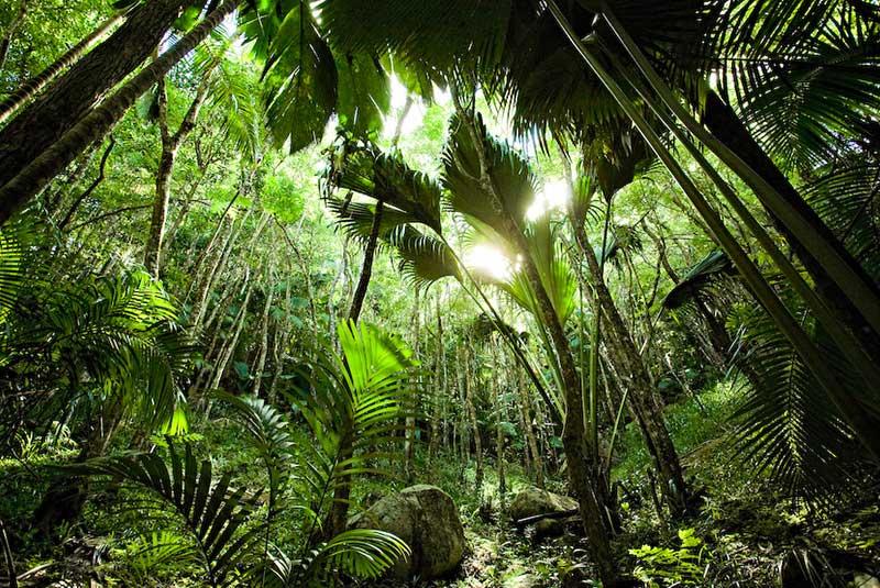 جنگل وله دو مه در سیشل