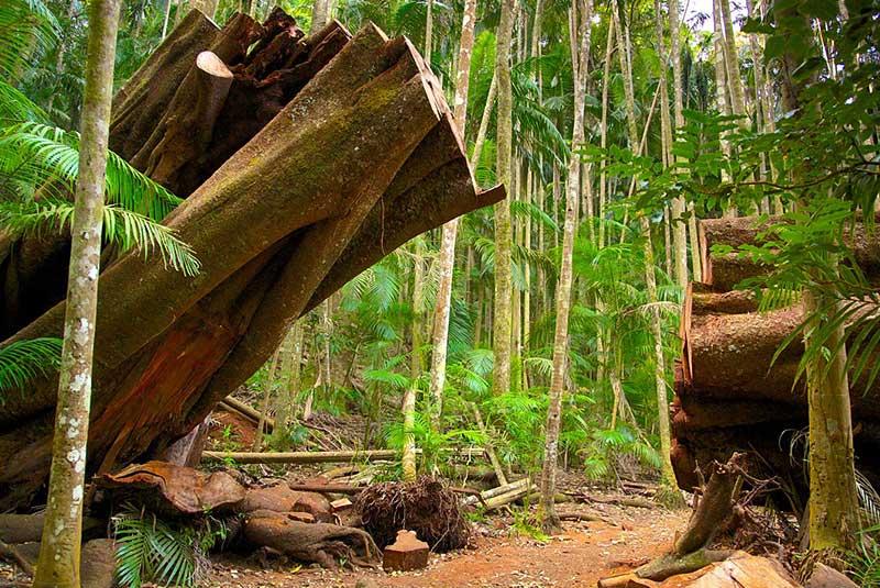 پارک ملی تمبورین استرالیا