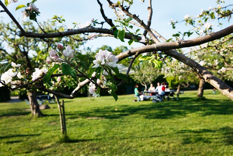باغ روسندالس ترادگارد  استکهلم
