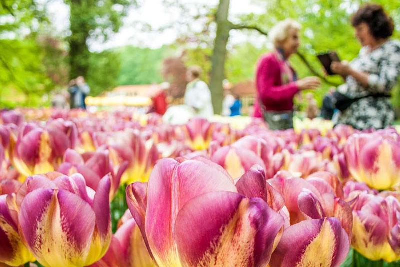 باغ گل کوکنهوف در لیسه هلند