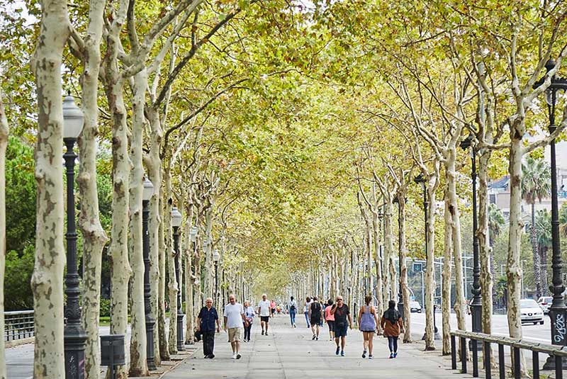 خیابان اوینگودا دیاگونال در بارسلونا