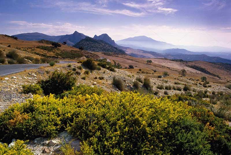 پارک طبیعی مونس مالاگا