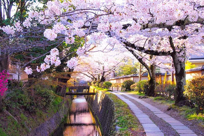 مسیر فیلسوف در کیوتو