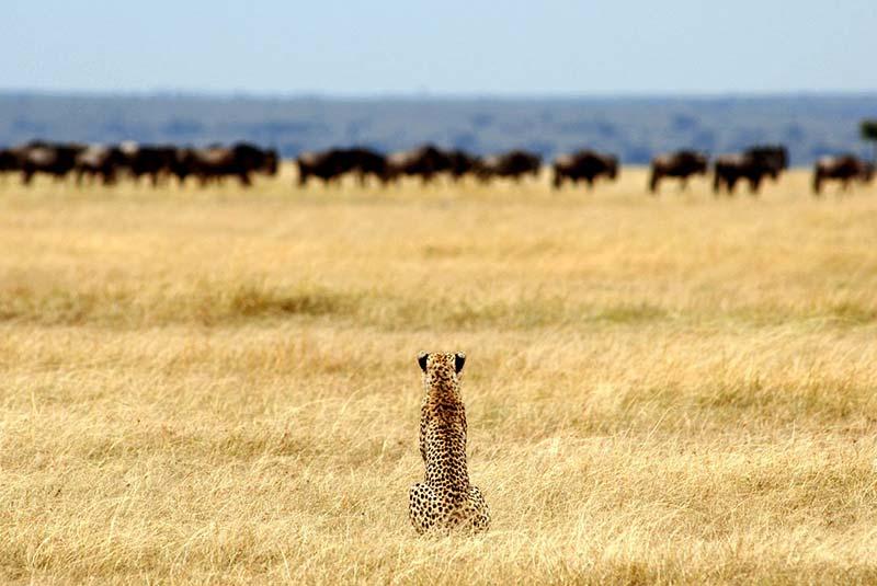 پارک ملی سرنگتی در آفریقا