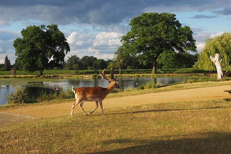 بوشی پارک در لندن