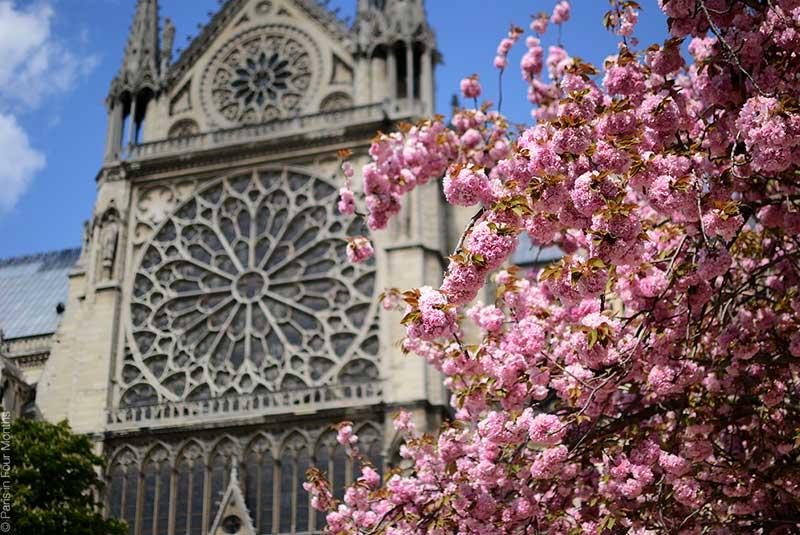 پاریس در بهار - کلیسای نوتردام