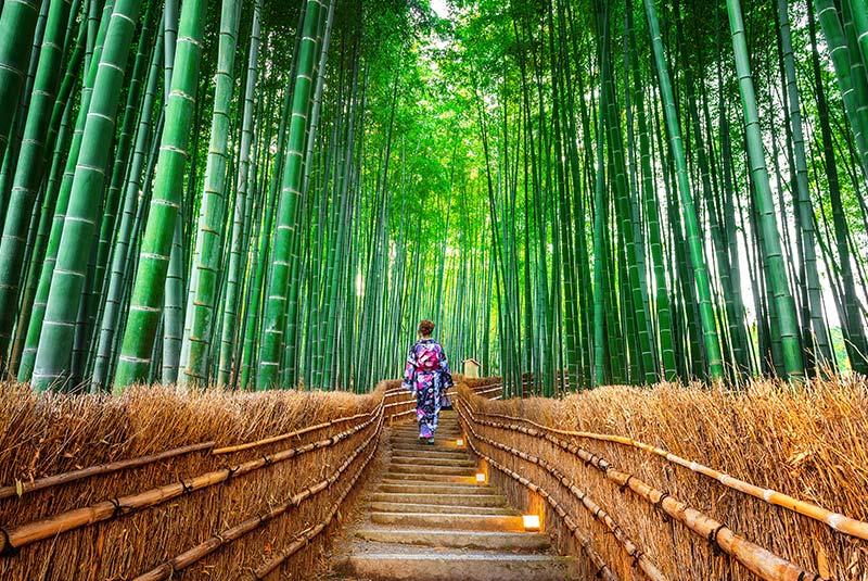 جنگل های بامبوی ساگانو