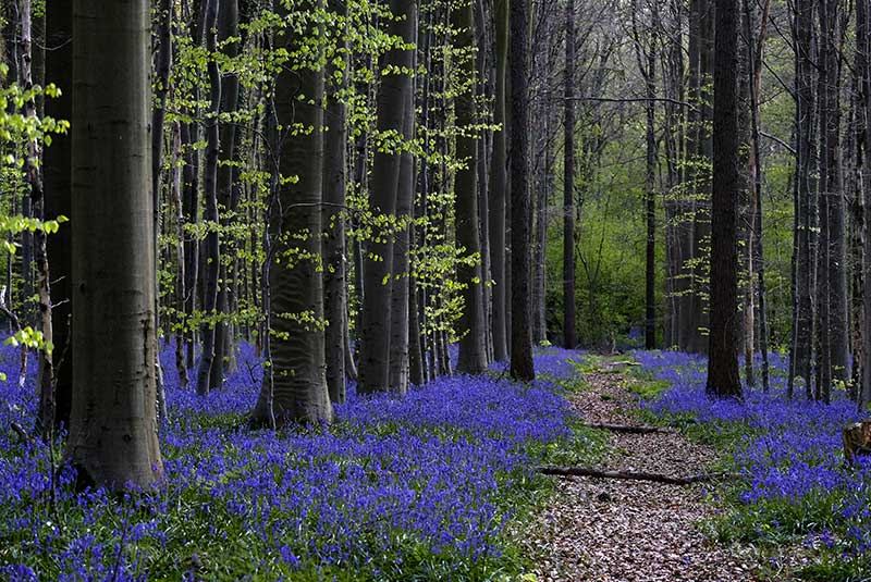 طبیعت بلژیک