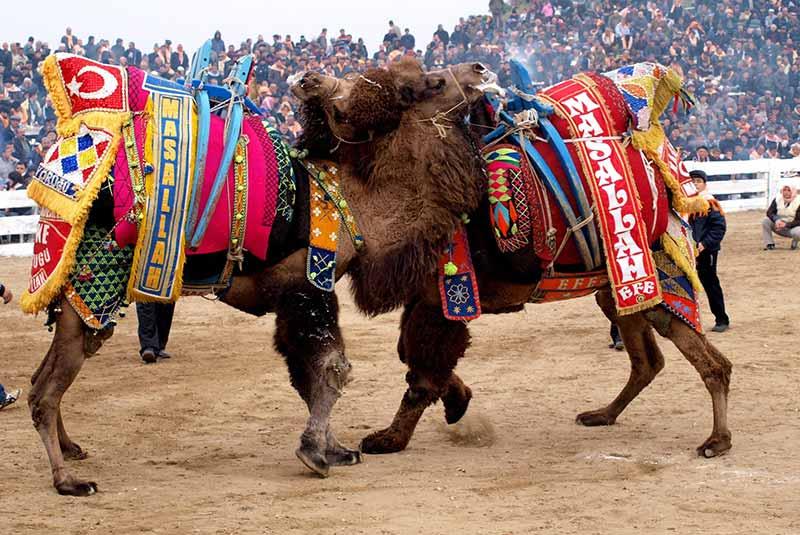 فستیوال های ترکیه