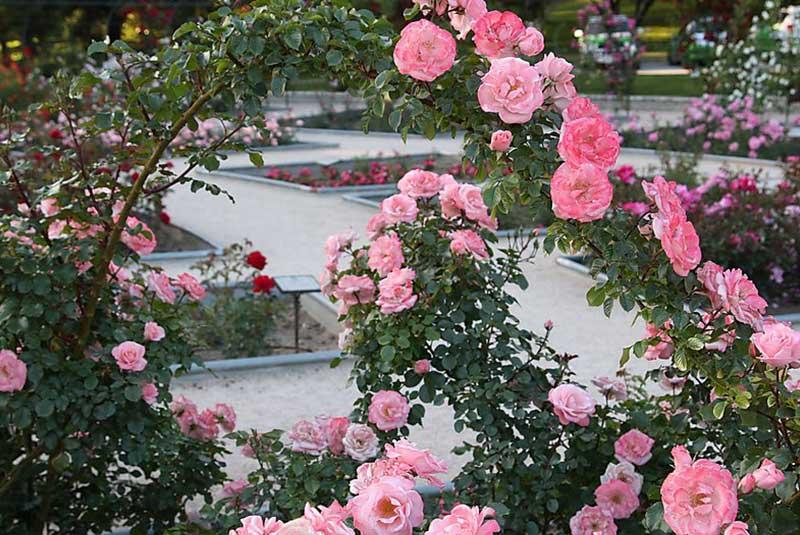 باغ گل مادرید