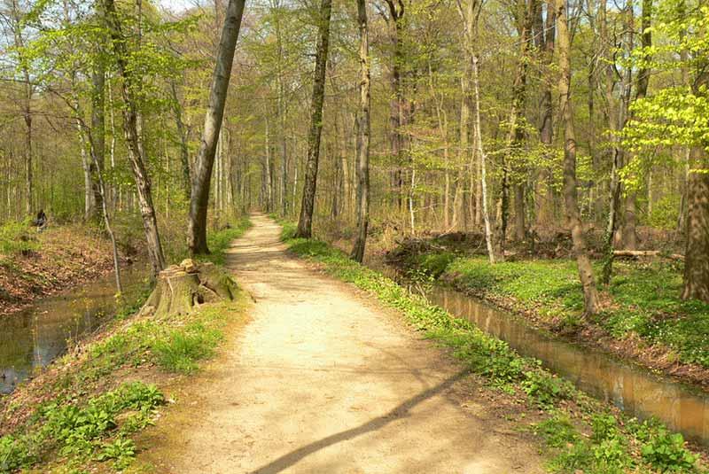 جنگل هانوفر