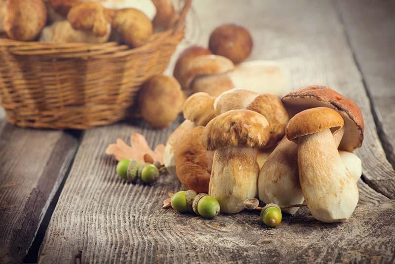 فصل قارچ در بارسلون