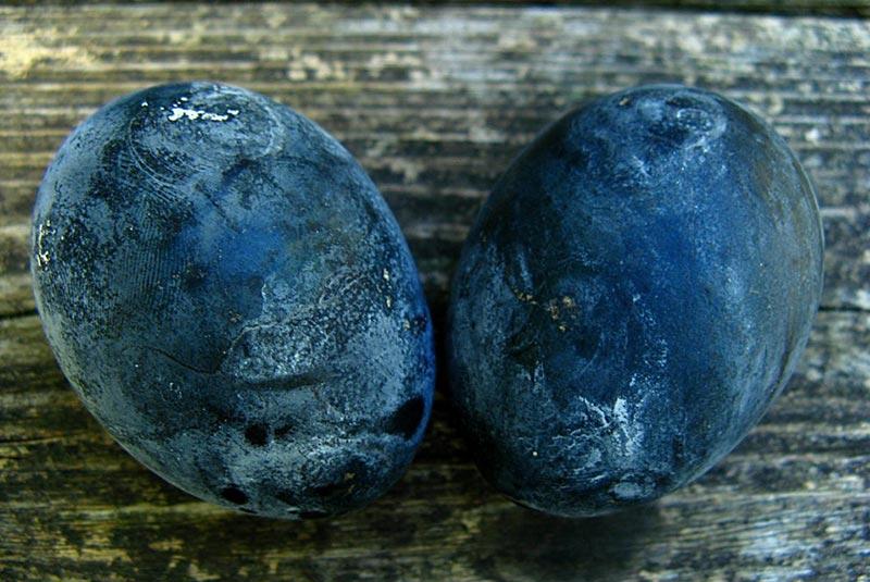 تخم مرغ سیاه اواکودانی